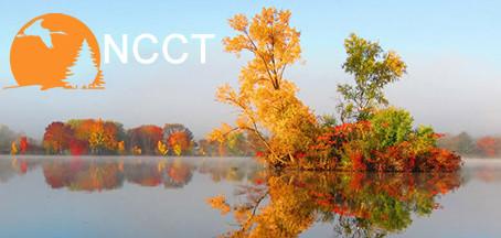 NCCT Image